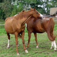 Ist Pferdehaltung artgerecht?