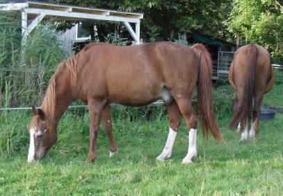 August-2014-Pferde-mampfen