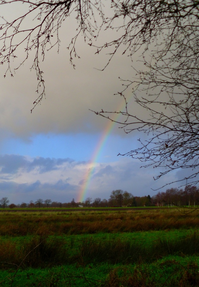 Regenbogen-10.12.2014