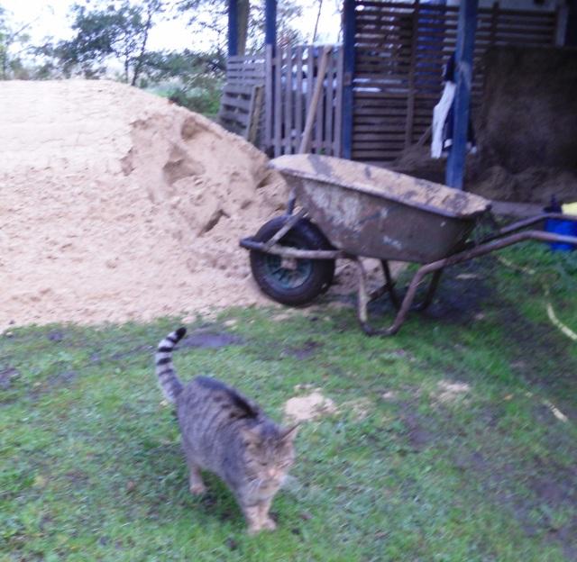Sand-schaufeln-c