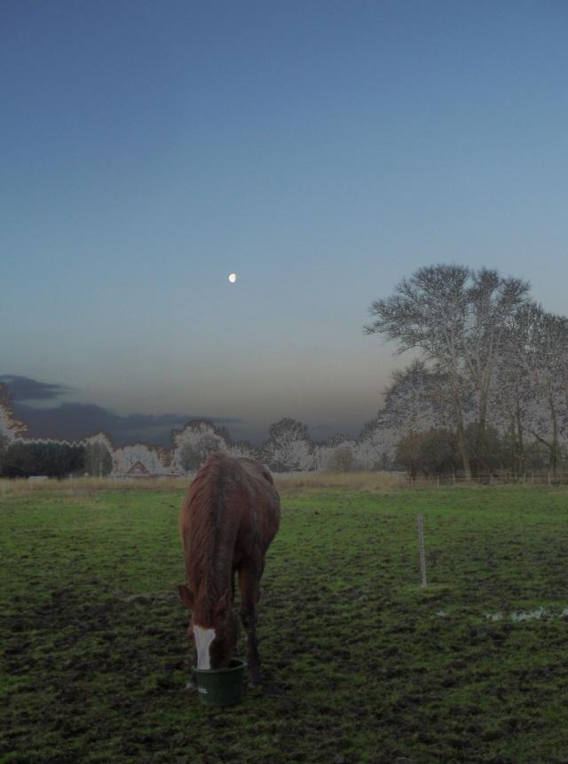 Pferd-mit-Mond-b