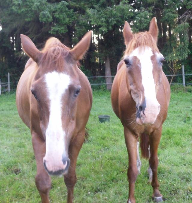 Pferde-17.07.2016-folgt-mir-1