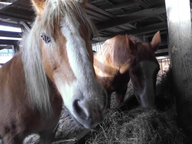 Pferde-18.01.2018-c.jpg