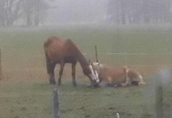 Pferde 22.03.2019 e