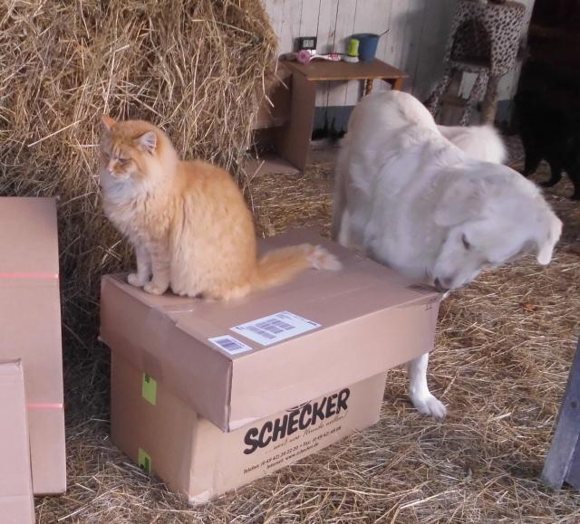 Tiere und Pakete 2.jpg