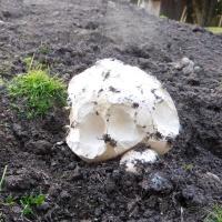 Ist das ein Pilz oder kann das weg?